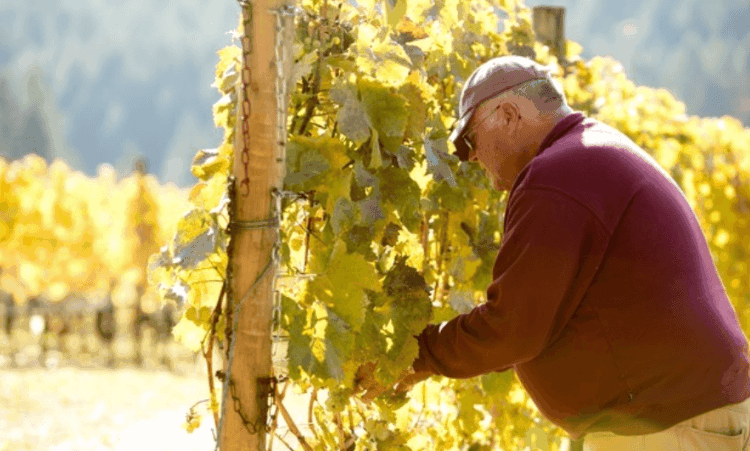 kramer-vineyards-hero-image-1