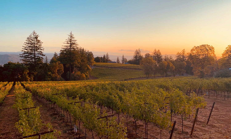 lamborn-family-vineyards-1500x900