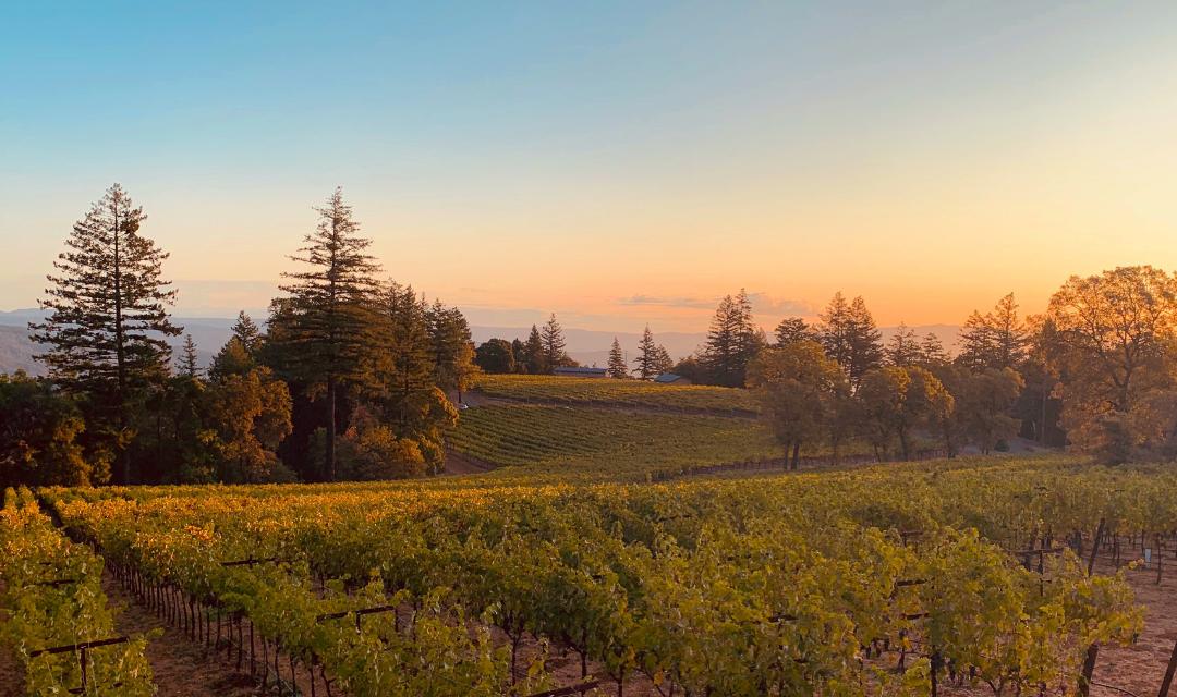 lamborn-family-vineyards-sunset